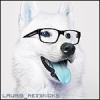 Lauris_reinikioks